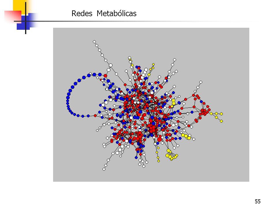 55 Redes Metabólicas