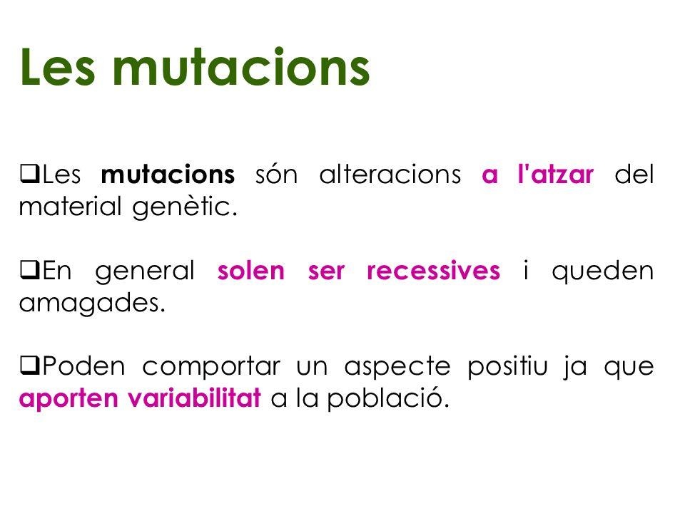 Les mutacions Les mutacions són alteracions a l'atzar del material genètic. En general solen ser recessives i queden amagades. Poden comportar un aspe
