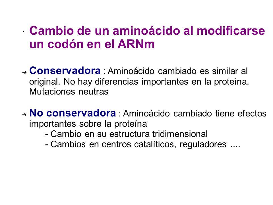 · Cambio de un aminoácido al modificarse un codón en el ARNm Conservadora : Aminoácido cambiado es similar al original. No hay diferencias importantes