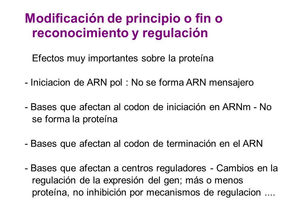 Modificación de principio o fin o reconocimiento y regulación Efectos muy importantes sobre la proteína - Iniciacion de ARN pol : No se forma ARN mens