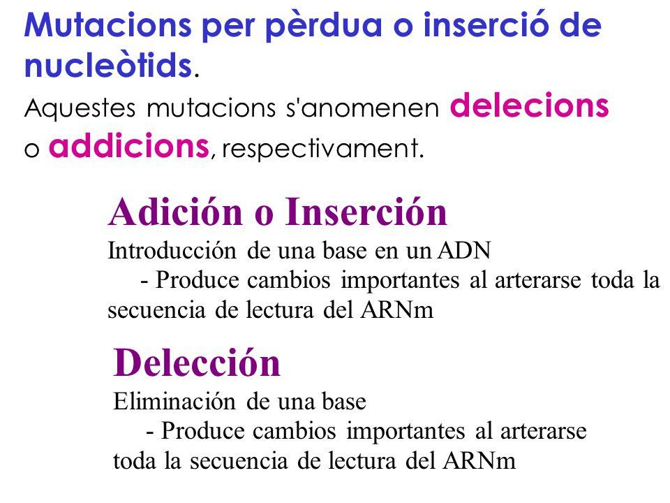 Mutacions per pèrdua o inserció de nucleòtids. Aquestes mutacions s'anomenen delecions o addicions, respectivament. Adición o Inserción Introducción d