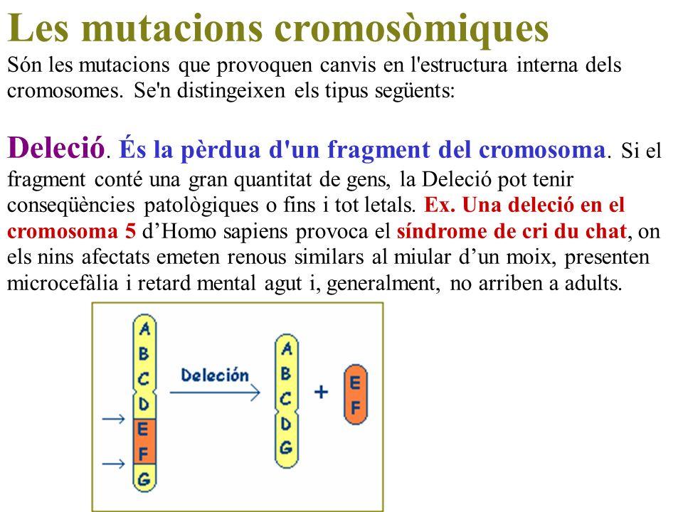 Les mutacions cromosòmiques Són les mutacions que provoquen canvis en l'estructura interna dels cromosomes. Se'n distingeixen els tipus següents: Dele