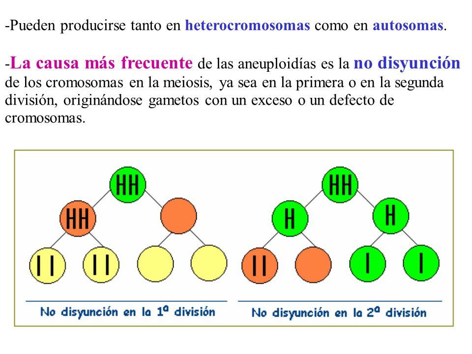 -Pueden producirse tanto en heterocromosomas como en autosomas. - La causa más frecuente de las aneuploidías es la no disyunción de los cromosomas en