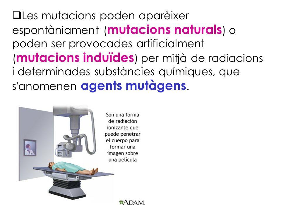 Les mutacions poden aparèixer espontàniament ( mutacions naturals ) o poden ser provocades artificialment ( mutacions induïdes ) per mitjà de radiacio