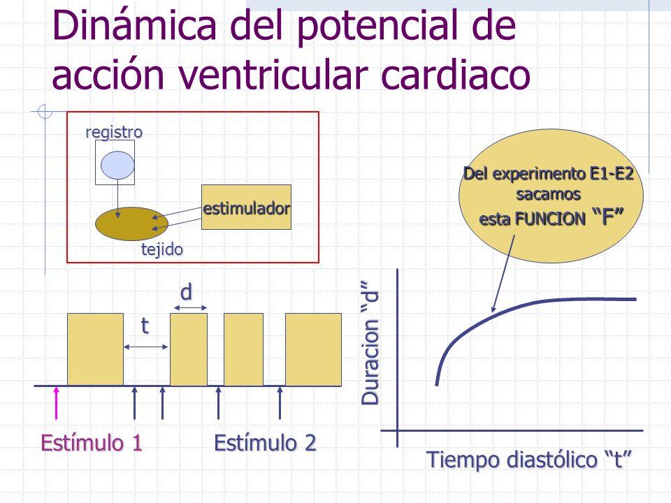Dinámica del potencial de acción ventricular cardiaco Estímulo 1 Estímulo 2 Duracion d Tiempo diastólico t dt Del experimento E1-E2 sacamos esta FUNCION F estimulador registro tejido