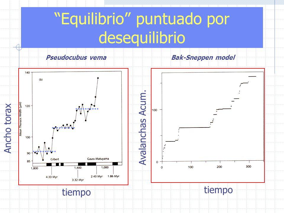 tiempo Equilibrio puntuado por desequilibrio Pseudocubus vema Ancho torax tiempo Bak-Sneppen model Avalanchas Acum.