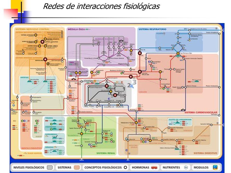 Redes de interacciones fisiológicas