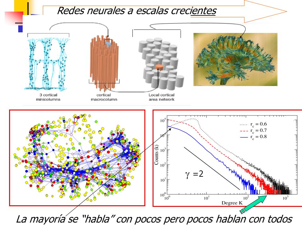 Redes neurales a escalas crecientes =2 La mayoría se habla con pocos pero pocos hablan con todos