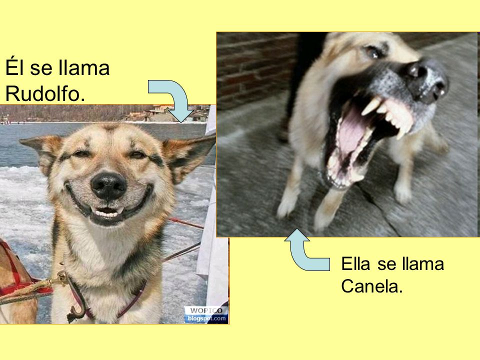 Él se llama Rudolfo. Ella se llama Canela.