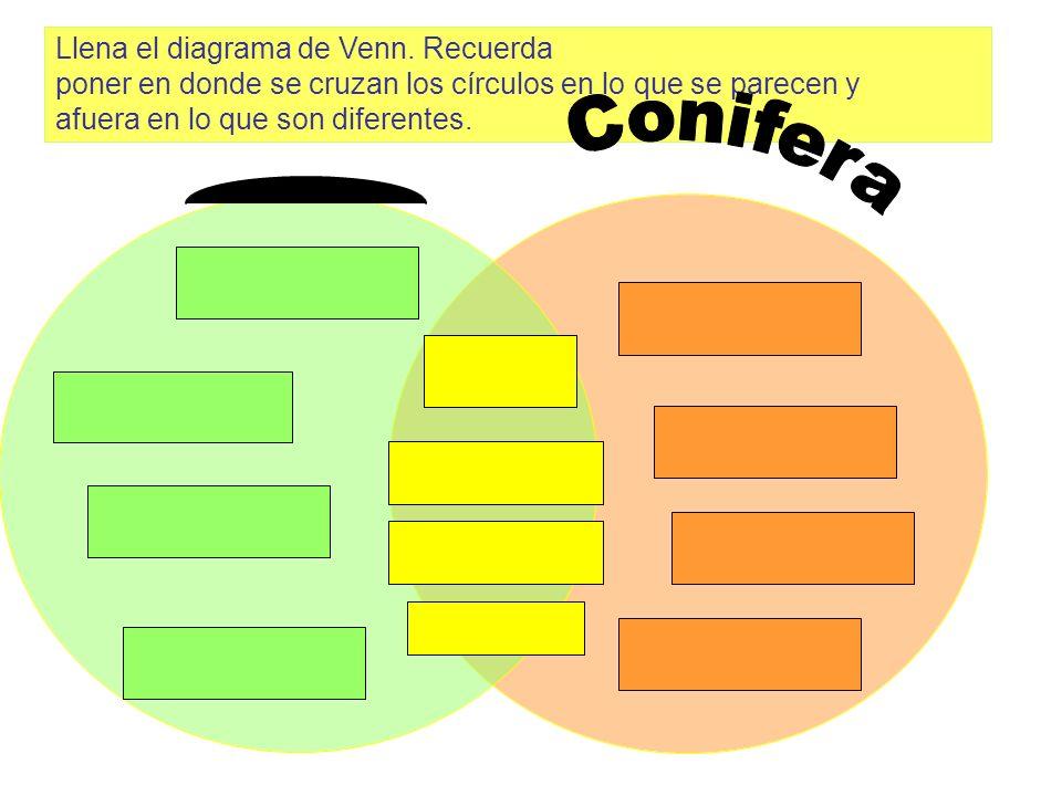 Llena el diagrama de Venn. Recuerda poner en donde se cruzan los círculos en lo que se parecen y afuera en lo que son diferentes.