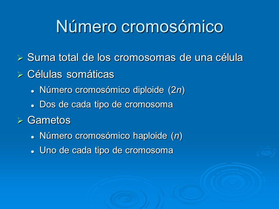 Número cromosómico Suma total de los cromosomas de una célula Suma total de los cromosomas de una célula Células somáticas Células somáticas Número cr