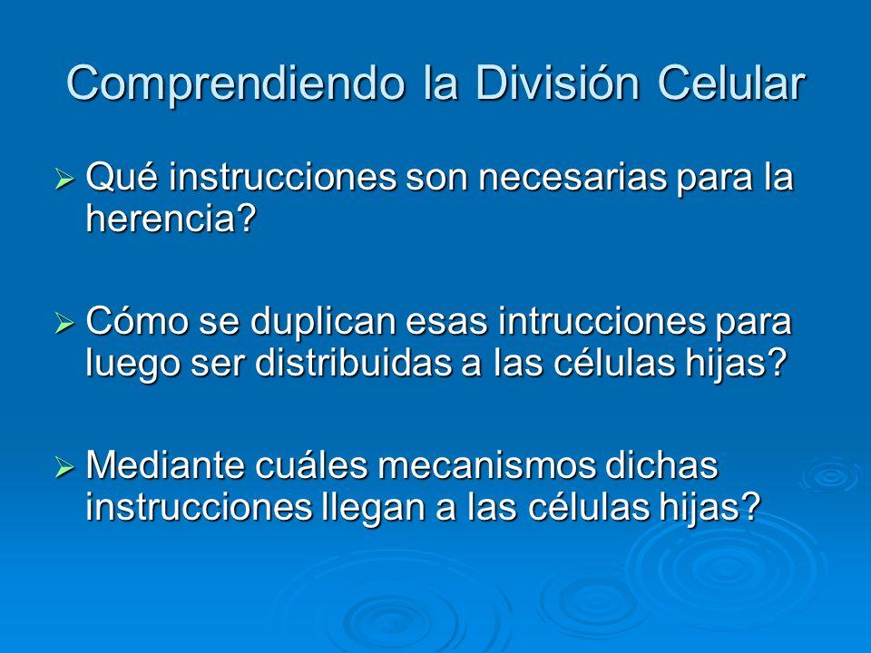Comprendiendo la División Celular Qué instrucciones son necesarias para la herencia? Qué instrucciones son necesarias para la herencia? Cómo se duplic