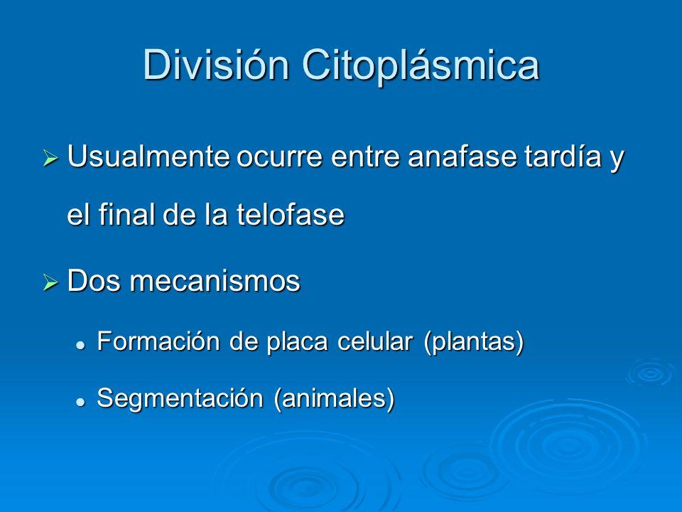 División Citoplásmica Usualmente ocurre entre anafase tardía y el final de la telofase Usualmente ocurre entre anafase tardía y el final de la telofas