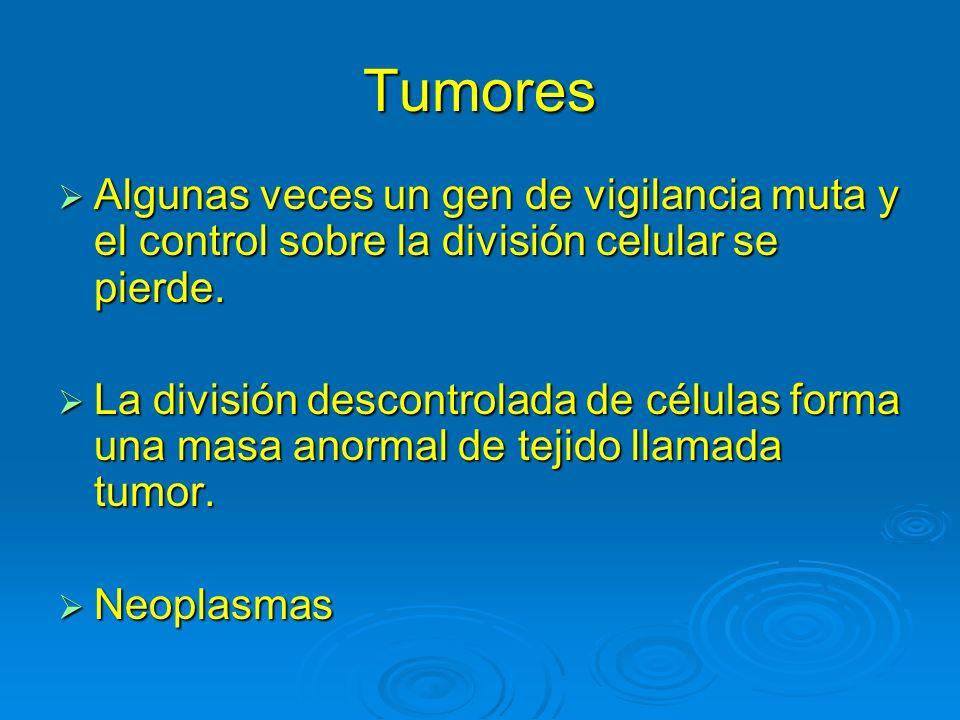 Tumores Algunas veces un gen de vigilancia muta y el control sobre la división celular se pierde. Algunas veces un gen de vigilancia muta y el control
