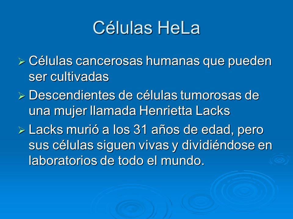 Células HeLa Células cancerosas humanas que pueden ser cultivadas Células cancerosas humanas que pueden ser cultivadas Descendientes de células tumoro
