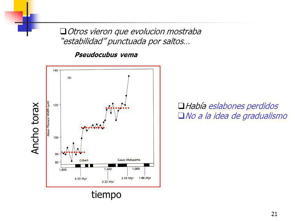 21 Pseudocubus vema Ancho torax tiempo Otros vieron que evolucion mostraba estabilidad punctuada por saltos… Había eslabones perdidos No a la idea de