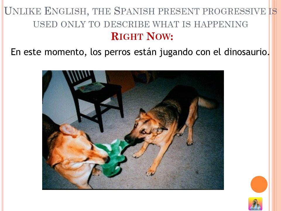 Y ahora mismo los perros están jugando con la marmota.