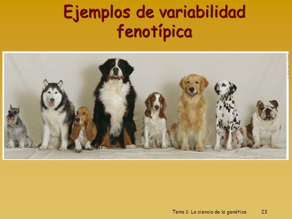 Tema 1: La ciencia de la genética23 Ejemplos de variabilidad fenotípica