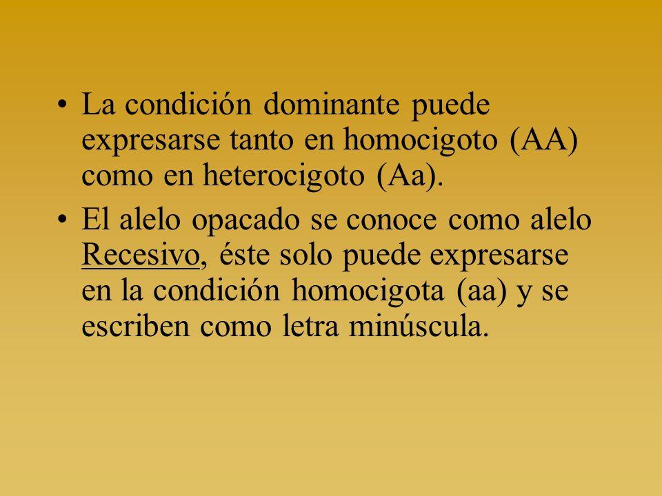 La condición dominante puede expresarse tanto en homocigoto (AA) como en heterocigoto (Aa). El alelo opacado se conoce como alelo Recesivo, éste solo