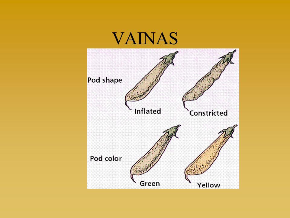 Tema 1: La ciencia de la genética25 Ejemplos de variabilidad interespecífica