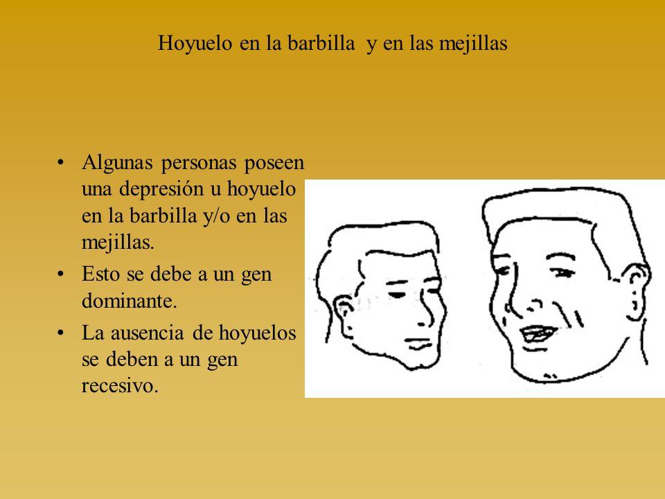 Hoyuelo en la barbilla y en las mejillas Algunas personas poseen una depresión u hoyuelo en la barbilla y/o en las mejillas. Esto se debe a un gen dom