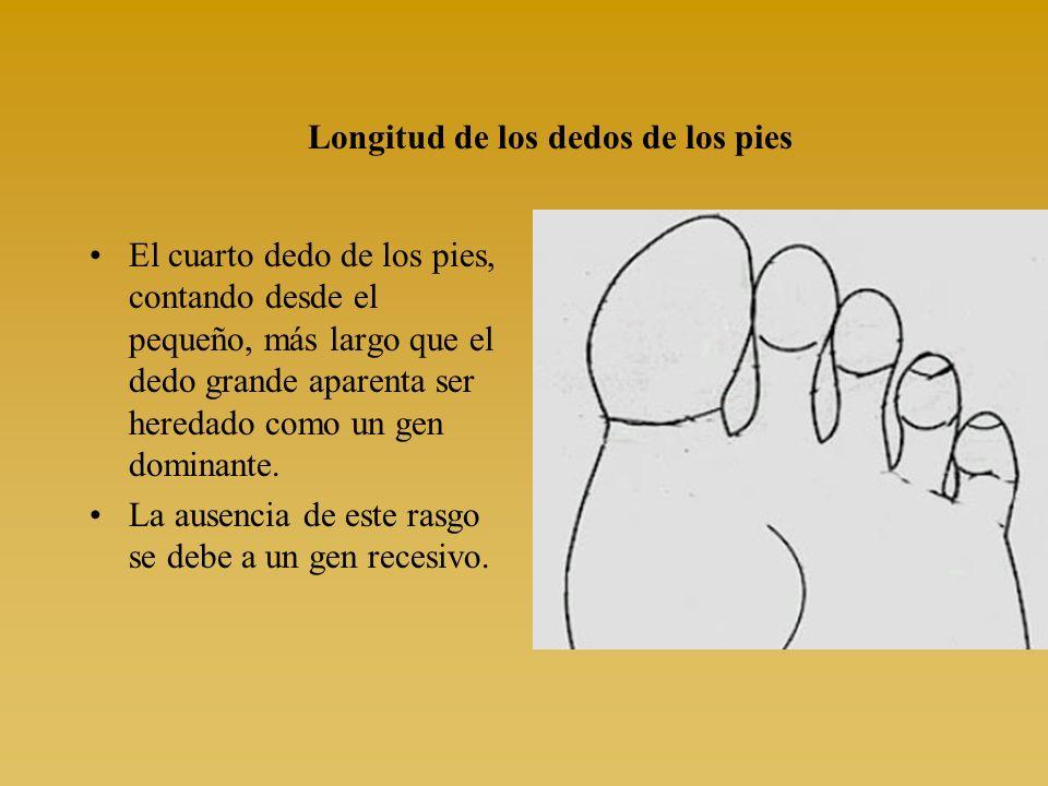 Longitud de los dedos de los pies El cuarto dedo de los pies, contando desde el pequeño, más largo que el dedo grande aparenta ser heredado como un ge