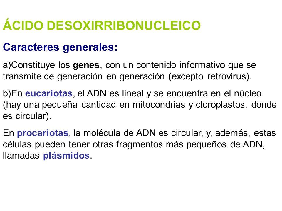 ÁCIDO DESOXIRRIBONUCLEICO Caracteres generales: a)Constituye los genes, con un contenido informativo que se transmite de generación en generación (exc