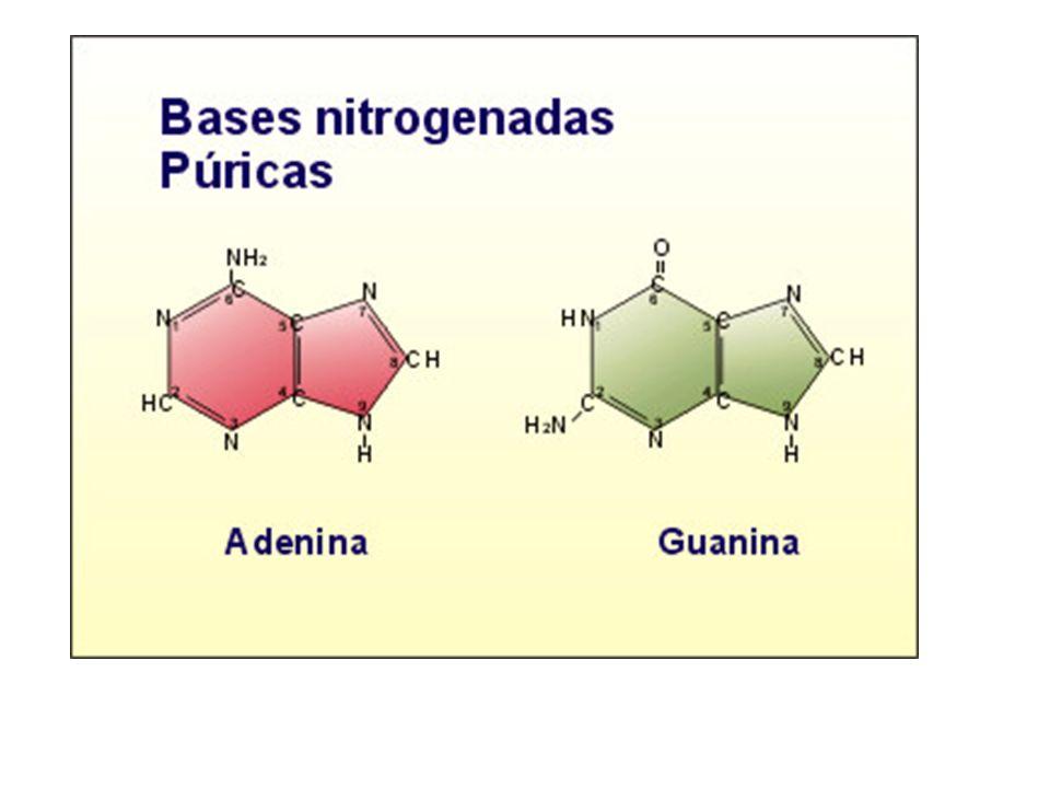 Estructura a)El orden de los nucleótidos (o de las bases) en la molécula se llama secuencia y constituye la estructura primaria ; la secuencia de un ARN determina un mensaje genético.