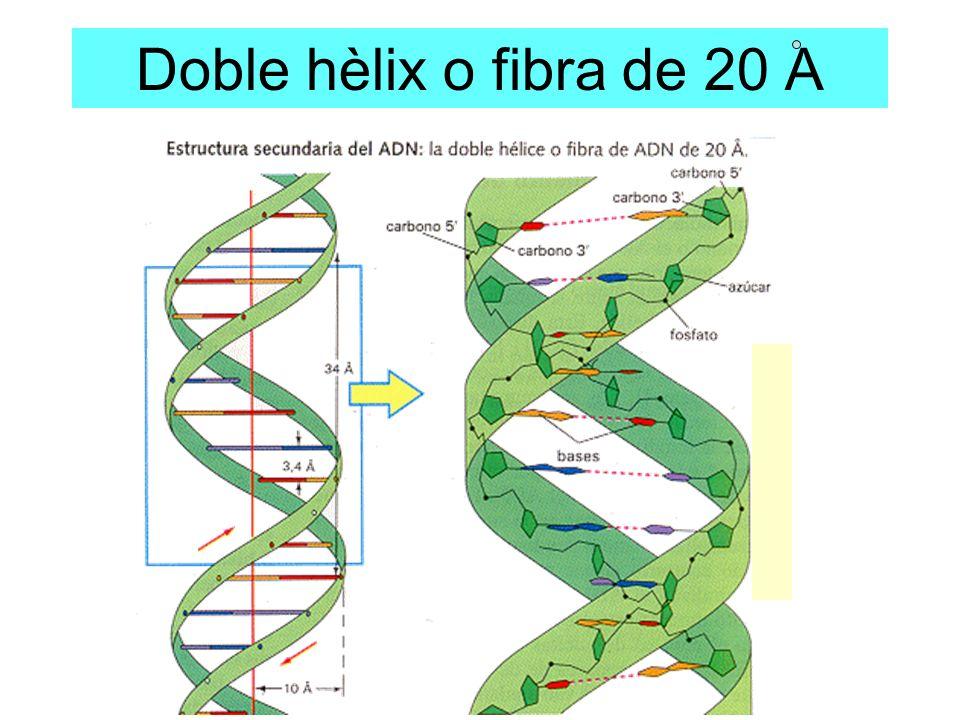 Doble hèlix o fibra de 20 A