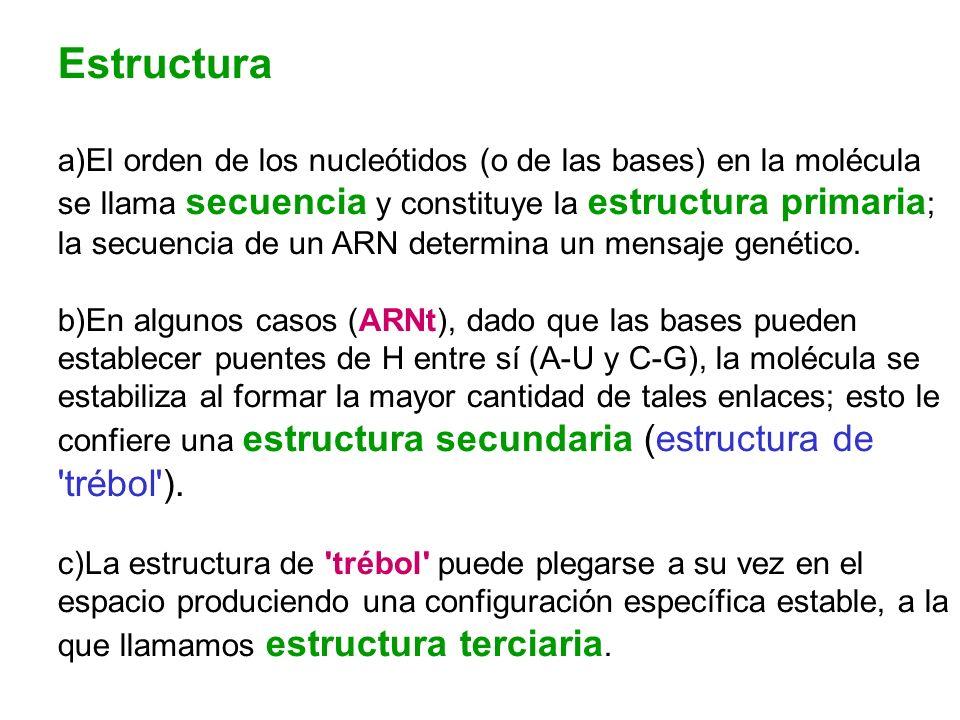 Estructura a)El orden de los nucleótidos (o de las bases) en la molécula se llama secuencia y constituye la estructura primaria ; la secuencia de un A