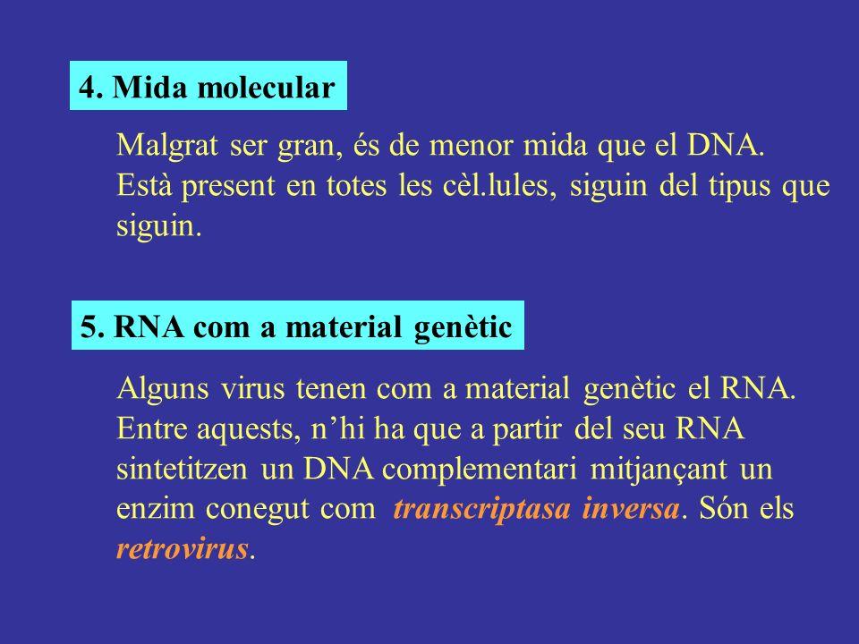 4. Mida molecular Malgrat ser gran, és de menor mida que el DNA. Està present en totes les cèl.lules, siguin del tipus que siguin. 5. RNA com a materi