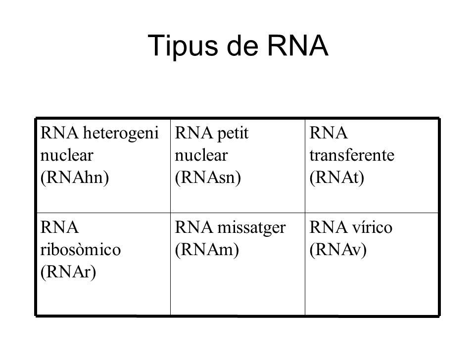 Tipus de RNA RNA vírico (RNAv) RNA missatger (RNAm) RNA ribosòmico (RNAr) RNA transferente (RNAt) RNA petit nuclear (RNAsn) RNA heterogeni nuclear (RN
