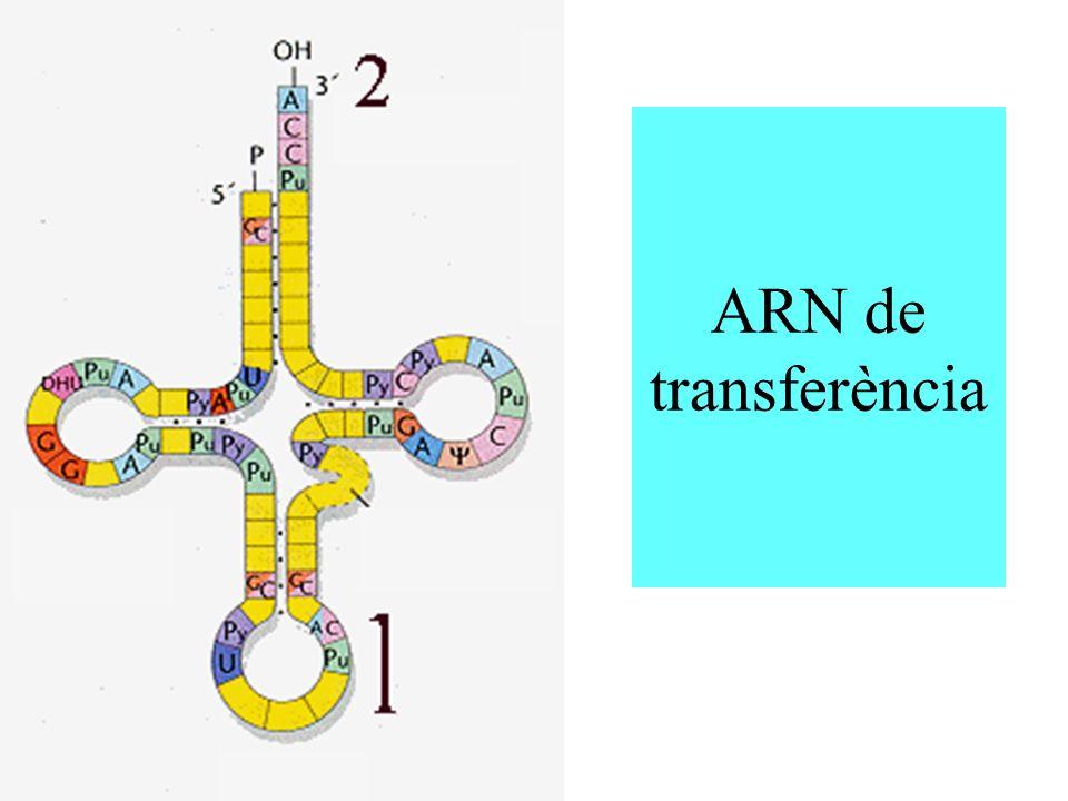ARN de transferència