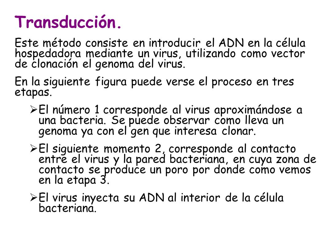 Transducción. Este método consiste en introducir el ADN en la célula hospedadora mediante un virus, utilizando como vector de clonación el genoma del