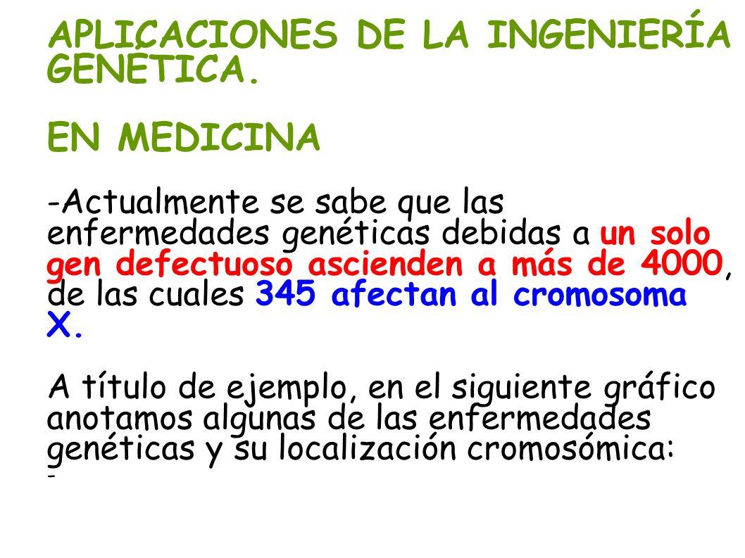 APLICACIONES DE LA INGENIERÍA GENÉTICA. EN MEDICINA -Actualmente se sabe que las enfermedades genéticas debidas a un solo gen defectuoso ascienden a m