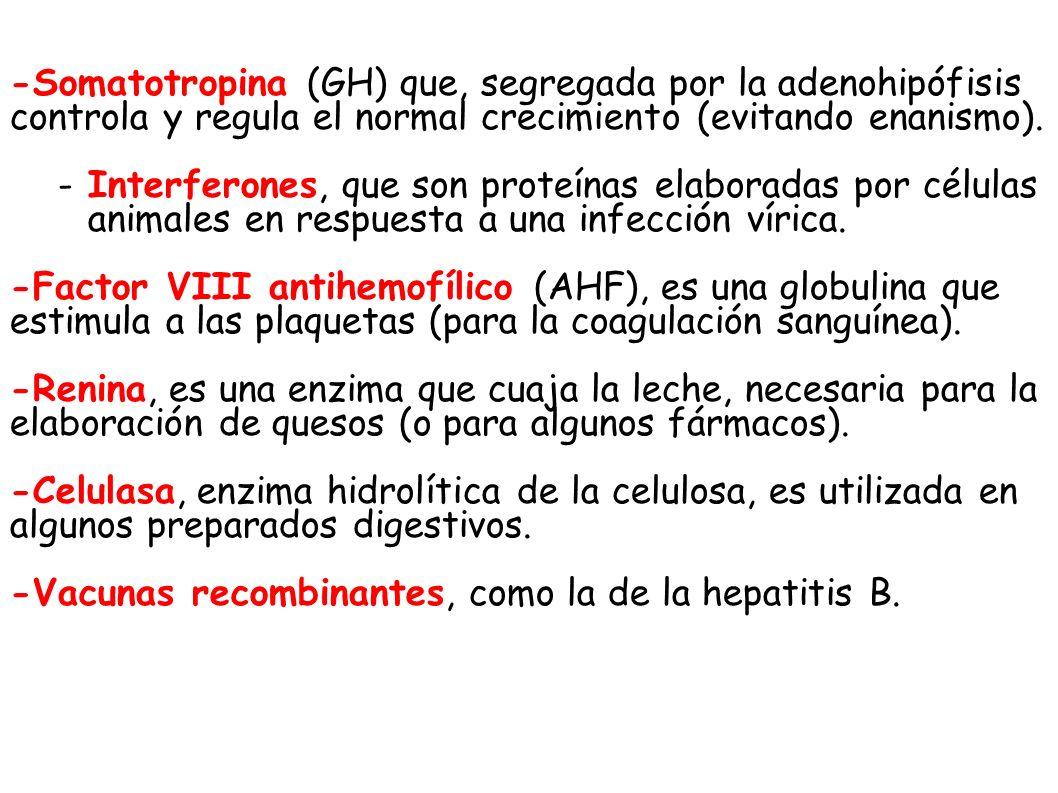 -Somatotropina (GH) que, segregada por la adenohipófisis controla y regula el normal crecimiento (evitando enanismo). -Interferones, que son proteínas