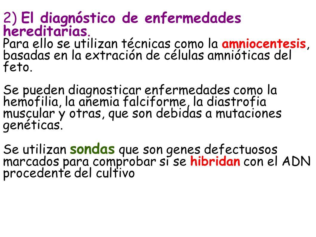2) El diagnóstico de enfermedades hereditarias. Para ello se utilizan técnicas como la amniocentesis, basadas en la extración de células amnióticas de