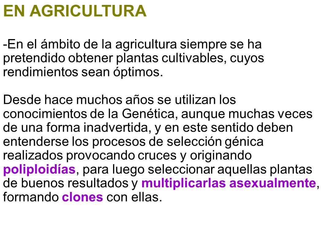 EN AGRICULTURA -En el ámbito de la agricultura siempre se ha pretendido obtener plantas cultivables, cuyos rendimientos sean óptimos. Desde hace mucho