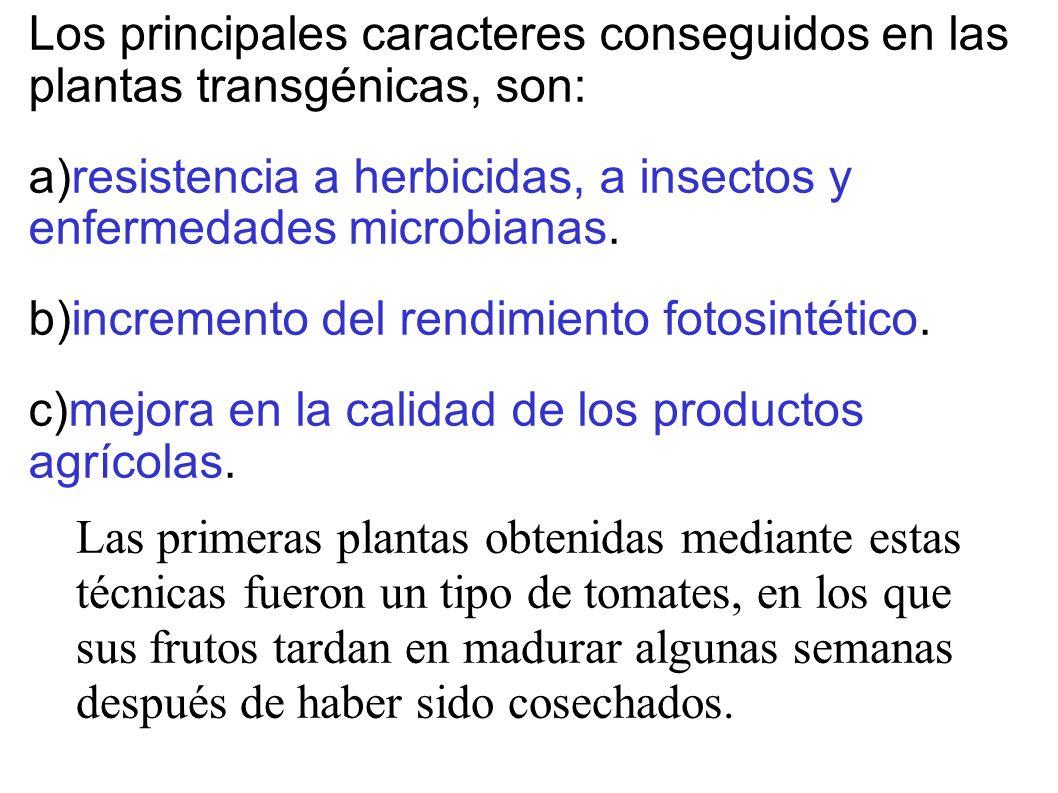 Los principales caracteres conseguidos en las plantas transgénicas, son: a)resistencia a herbicidas, a insectos y enfermedades microbianas. b)incremen