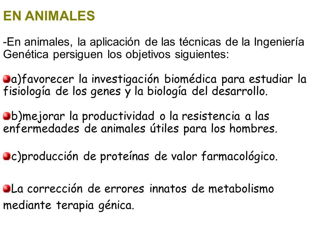 EN ANIMALES -En animales, la aplicación de las técnicas de la Ingeniería Genética persiguen los objetivos siguientes: a)favorecer la investigación bio