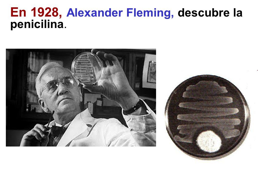En 1928, Alexander Fleming, descubre la penicilina.
