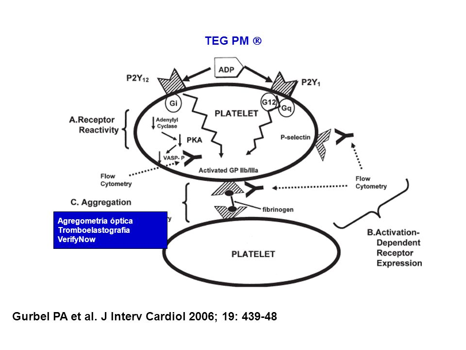 Gurbel PA et al. J Interv Cardiol 2006; 19: 439-48 Agregometría óptica Tromboelastografía VerifyNow TEG PM