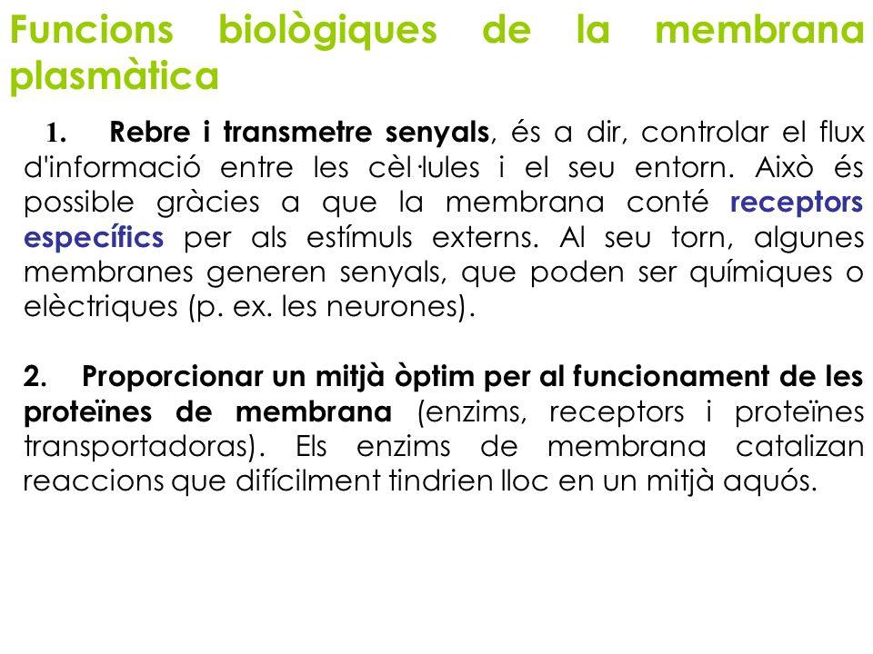 Funcions biològiques de la membrana plasmàtica 1. Rebre i transmetre senyals, és a dir, controlar el flux d'informació entre les cèl·lules i el seu en