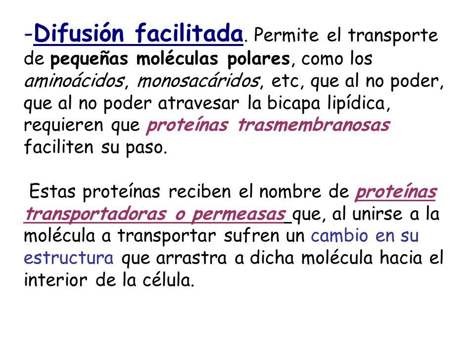 -Difusión facilitada. Permite el transporte de pequeñas moléculas polares, como los aminoácidos, monosacáridos, etc, que al no poder, que al no poder