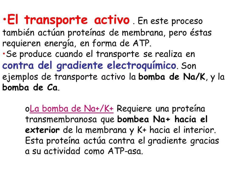El transporte activo. En este proceso también actúan proteínas de membrana, pero éstas requieren energía, en forma de ATP. Se produce cuando el transp