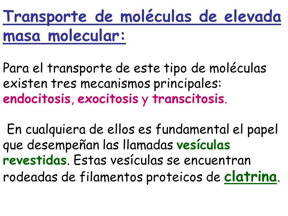Transporte de moléculas de elevada masa molecular: Para el transporte de este tipo de moléculas existen tres mecanismos principales: endocitosis, exoc