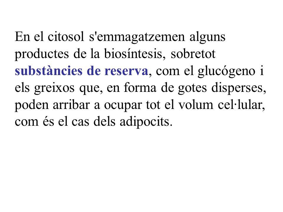 En el citosol s'emmagatzemen alguns productes de la biosíntesis, sobretot substàncies de reserva, com el glucógeno i els greixos que, en forma de gote