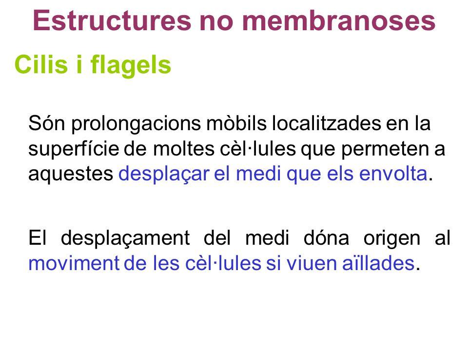 Estructures no membranoses Cilis i flagels Són prolongacions mòbils localitzades en la superfície de moltes cèl·lules que permeten a aquestes desplaça