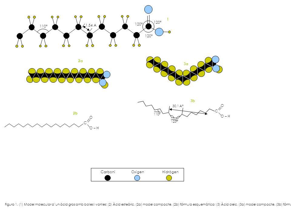 110º 120º 1,54 A C O – H O C O 123º 110º 30,1 Aº 3a 1 3b 2b 2a Carboni Oxigen Hidrògen Figura 1. (1) Model molecular dun àcid gras amb bolles i varill
