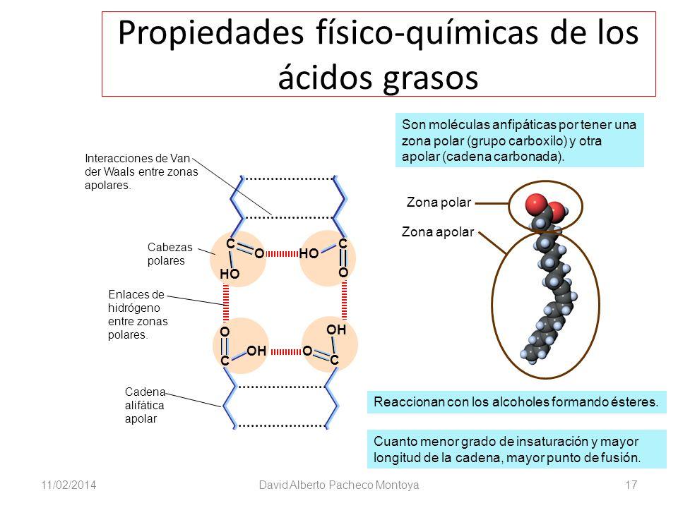 Propiedades físico-químicas de los ácidos grasos 11/02/2014David Alberto Pacheco Montoya17 O C HO C O C O OH O C Son moléculas anfipáticas por tener u